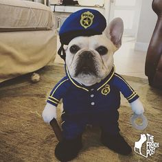 Rico, the French Bulldog in a Police Costume, @rico_the_frenchie on instagram