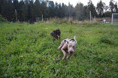 Gårdstunet Hundepensjonat: Når ´himmelen ramler ned´, ja da blir det grisete ...