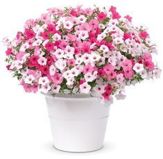 Container Gardening Above - A x Flower Pillow to replant in your own container.Exposure: SunSeason: SummerThis FLOWER PILLOW® is pre-planted with:Supertunia® Vista Bubblegum® PetuniaSupertunia® Vista Silverberry PetuniaSupertunia® Vista Fuchsia Petunia Container Flowers, Flower Planters, Container Plants, Garden Planters, Container Gardening, Flower Pots, Succulent Containers, Fall Planters, Short Plants