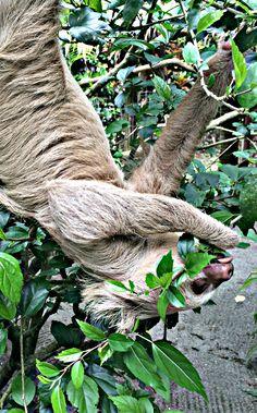 The sloth garden at the Jaguar Rescue Center in Puerto Viejo, Costa Rica | The Mochilera Diaries