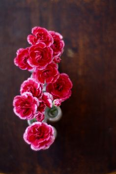 Mini carnations are very sweet and fun to use in bouquets I especially enjoy the two tone colors.