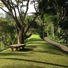 Adam's Review of Como Shambhala Estate, an extraordinary wellness retreat located in the heart of Bali.