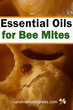 Beekeeping 101 Can using essential oils help honey bees fight varroa mite infestations? Bee Mites, Honey Bee Farming, Feeding Bees, Bee Friendly Plants, Bee Facts, Bee Hive Plans, Beekeeping For Beginners, Bee Swarm, Buzz Bee