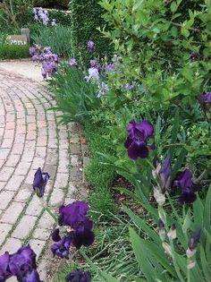 Irises - Shades of Purple ; Hidcote Manor Garden (Chipping Campden, England)