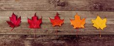 60 Breathtaking Fall Pictures - The Photo Argus