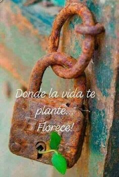 Donde la vida te plante... Florece! Sweet Quotes, True Quotes, Quiet Girl, Morning Inspirational Quotes, Special Words, Life Words, Deep Thinking, Green Nature, Spanish Quotes
