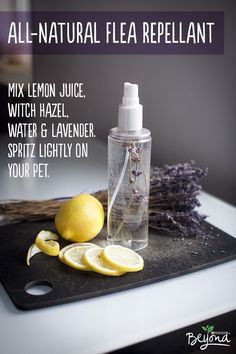 Did you know that many ingredients in your garden act as all-natural flea repellant? Steep lemon juice, witch hazel, water, and lavender together to make a simple spray that will help keep your pet flea-free and smelling fresh.