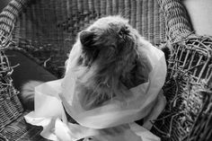 gatto combina guai - G. Marinelli  #internationalcatday