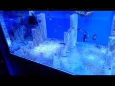 Reef Aquarium Stock WOW !!!