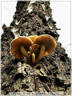 Up in a tree big yellow paddo's Big Yellow, Stuffed Mushrooms, Vegetables, Guys, Food, Stuff Mushrooms, Essen, Vegetable Recipes, Meals