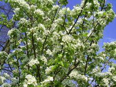 Dom i ogród: Wiosna w moim ogrodzie :)