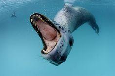 TOP 10 Amazing Underwater Shots