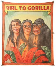 Girl to gorilla sideshow banner by Fred G. Johnson http://www.cultofweird.com/sideshow/girl-gorilla-grind-show/
