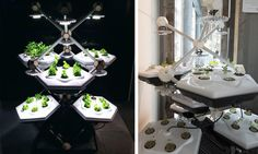 Hexagro Urban Farming has designed the Living Farming Tree, a modular, scalable indoor gardening system.