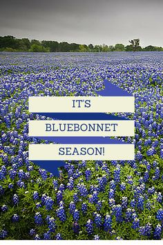 Home - Leigh Country The Beautiful Country, Blue Bonnets, Time Of The Year, Country Living, Campaign, The Unit, Content, Seasons, Medium