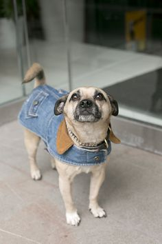 Street Style: dogs in coats. Jacki loves this!