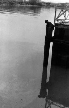 ELLIOTT ERWITT New Orleans, 1954