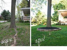 Landscaping trees in backyard