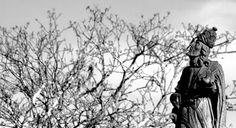Profeta de Aleijadinho, Brasil © André Gonçalves #luxosqueoimpériotece #luxo #brasil #minasgerais #congonhas #esculturas #dozeprofetas #dozeprofetasdealeijadinho #aleijadinho #império #imperivm #imperivmriodejaneiro | Aleijadinho Prophet, Brazil © André Gonçalves #luxuriesthattheempireweaves #luxury #brazil #minasgerais #congonhas #sculptures #twelveprophets #twelvealeijadinhoprophets #aleijadinho #empire #imperivm #imperivmriodejaneiro