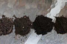 Amend the soil in your vegetable gardens now for summer crops