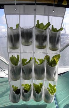 Two Tricks for Homesteading on Your Boat | Sail Magazine - This is a really simple way to grow small herbs.