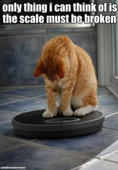 12 Times Animals Stepped On The Weight Scale And Didn't Like What They See (Memes) - CutesyPooh