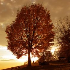Last Of A German Autumn...