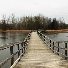 """Boardwalk"" by Debbie Oppermann. A moody, cool, spring day at Valens Conservation Area, Cambridge Ontario Canada, was the perfect day for a quiet walk on the boardwalk and trails. Cambridge Ontario, Outdoor Photography, Art Photography, Day Trips, Weekend Trips, How To Be Outgoing, Wood Print, Wonderful Images, Beautiful Landscapes"