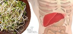 The researchers believe the antioxidants in broccoli sprouts are effective in suppressing the mechanisms of liver failure at a cellular level. http://wisemindhealthybody.com/realfarmacy/broccoli-micro-greens-grow-yourself/ #Cancer #cancerresearch
