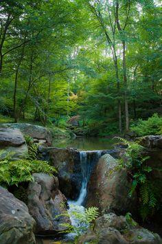 "nature-is-gorgeous: "" Garvan Woodland Gardens in Hot Springs, Arkansas, USA "" Beautiful Waterfalls, Beautiful Landscapes, Hot Springs Arkansas, Arkansas Usa, Beautiful Places, Beautiful Pictures, Image Nature, Woodland Garden, Forest Garden"