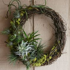 Living wreath with moss and air plants