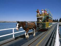 Victor Harbour horse tram across to Granite Island Living In Adelaide, City Of Adelaide, Melbourne, Sydney, Australia Living, Australia Travel, Travel Around The World, Around The Worlds, Adelaide South Australia