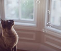 magic bubble cat, controlling the bubbles with her mind