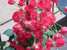#odelito #rosas #flores #bar