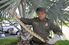 El Grupo de Protección Ambiental y Ecológica trabaja arduamente en pro de la preservación de la fauna silvestre