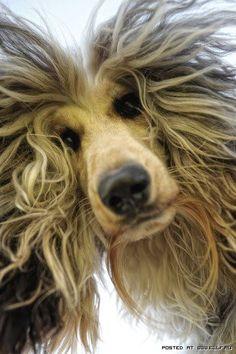 Dog hair!
