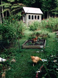 Setting up allotment gardens - this is how the gazebo becomes a cottage - Garten & Gemüseanbau mit Kindern - Farm Gardens, Outdoor Gardens, Country Life, Country Living, Country Farm, Country Bumpkin, Garden Cottage, Home And Garden, Farmhouse Garden