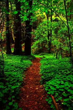 Trail - if I ever had the larger wooded property I dream of I'd put in my own mini-walking trail around the outer edges.