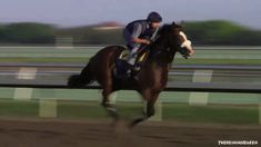 Union Rags working out :) This is an animated gif, so clickthru it to see him in action!!