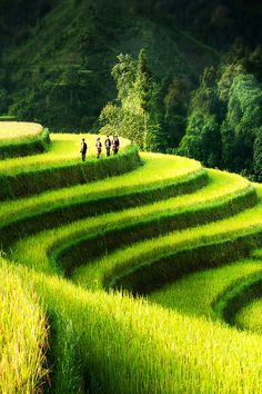 Rice Field Terrace - Northern Vietnam BY Bsam Please like, share, repin or follow us on Pinterest to have more interesting things. Thanks. http://hoianfoodtour.com/
