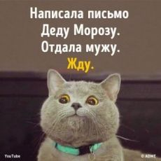 Funny Cats, Funny Jokes, Walk Around The World, Have Some Fun, Adult Humor, Man Humor, Good Mood, Cool Words, Animals And Pets