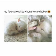 Super Teeny Weeny Itty Bitty Animals - World's largest collection of cat memes and other animals Cute Animal Memes, Cute Funny Animals, Cute Baby Animals, Animals And Pets, Cute Cats, Funny Cats, Animals Images, Puppies And Kitties, Cats And Kittens