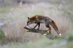 Kein Eisvogel - Bild & Foto von P. Lindel aus Tiere - Fotografie (29776456) | fotocommunity