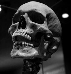 You will look like this in 127 years Skull Reference, Anatomy Reference, Tattoo Studio, Anatomy Bones, Skull Anatomy, Totenkopf Tattoos, Skull Pictures, Skull Artwork, Skeleton Art
