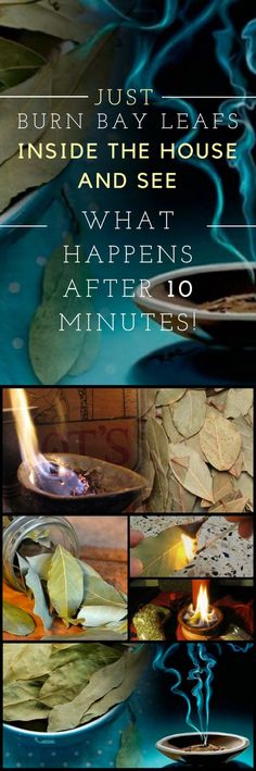 Just Burn Bay Leafs Inside the House and See What Happens After 10 Minutes!