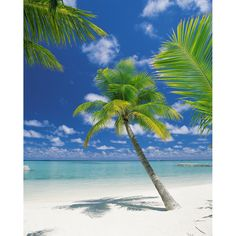 This beach mural features a pristine and perfect tropical scene. Palm trees lean to and fro in pure white sand while aqua sea and blue skies stretch out as far as the eye can see. - x - 4 Panel Mural - Paste Included - Vinyl Coated Paper Beach Wall Murals, Mural Wall, Door Murals, Beach Pink, Pirates Cove, Jamaica Vacation, Italy Vacation, Palmiers, Beach Aesthetic