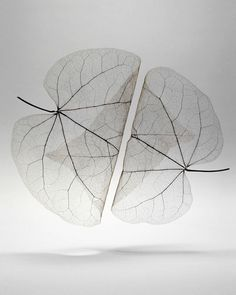 Autumn Leaves Transparent - Mathijs Labadie