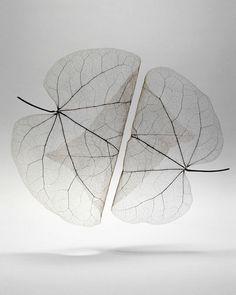 Autumn Leaves Transparent - Mathijs Labadie