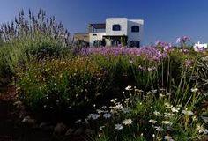 paros gardens greece - Google Search