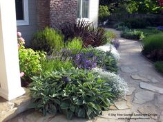 A colorful, drought-tolerant plant combination with year-round appeal. This bed includes Stachys - Lamb's Ears, Cerastium - Snow in Summer, Penstemon heterophyllus, Lavender, Coleonema - Breath of Heaven, Phormium - New Zealand flax. Positioned along a flagstone and decomposed granite pathway in San Anselmo CA. http://www.digyourgarden.com/portfolio/sleepyhollow